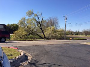 Tree growing in gulch in NW Oklahoma City; trunk not visible from ground level